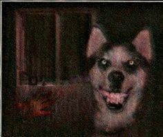 Smile dog creepy pasta