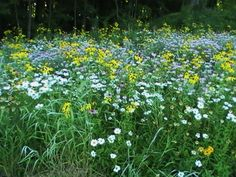 A Sea of Native Indiana Wildflowers...