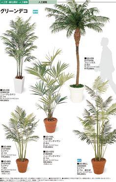 Interior Plants, Plate, Ideas Para, Diy Home Decor, Home Goods, Tropical, How To Plan, Green, Flowers