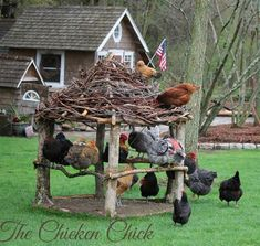 Great idea for the hens when they are free ranging! #freerangechickens