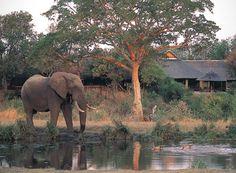 Sabi Sabi Private Game Reserve Conference Venue in Sabi Sands situated in the Mpumalanga Province of South Africa. Provinces Of South Africa, Game Lodge, Private Games, Game Reserve, Best Games, Lodges, Conference, Safari, Wildlife