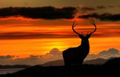Monarch of the Glen at Sunset by Fraser Ross, via Flickr