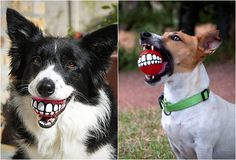 A Smiley Chew Toy for Dogs
