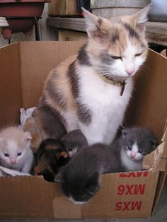 ** Aw, come on mau-ma. These are kits that their own mom was killed. The humans want you to be their surrogate milkers station.