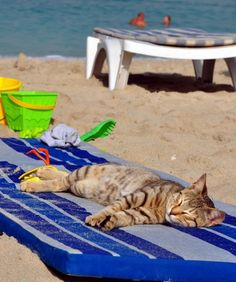 Beach Cat * -- my two favorite things... Cats and the beach!