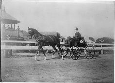 Franklin D. Roosevelt, driving carriage at Dutchess County Fair in Rhinebeck, New York