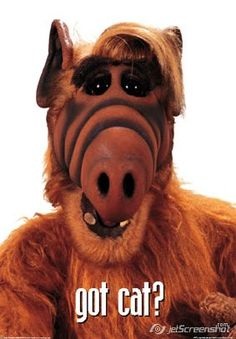 I have an Alf doll that is 25 years old. It is my most prized possession.