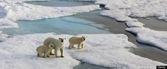 Records For Arctic Ice Melt, Greenhouse Gas Emissions In 2012 As World Continues To Warm: Report