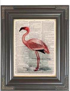 BOGO SALE Pink flamingo tropical bird Dictionary art print wall decor printed on old antique dictionary or music book page.  Item No. 832 by bmarinacci on Etsy https://www.etsy.com/listing/206615721/bogo-sale-pink-flamingo-tropical-bird