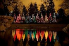 Christmas trees on water surface