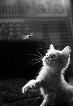 cute kitten1010