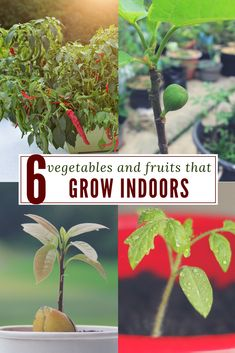 There are plenty of herbs, fruits and #vegetables you can #grow #indoors without worrying about pests, animals, weather - a lack of garden space #justplainliving via @justplainmarie