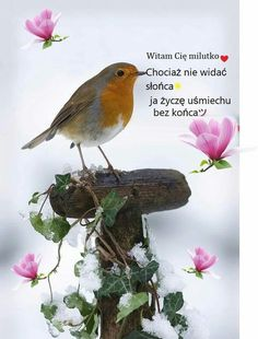 Good Morning, Bird, Animals, Night, Bible, Good Morning Funny, Polish, Quotes, Buen Dia