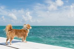 Popular on 500px : The Dog and the Sea by jenniferstahn