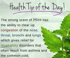 #Health Tip of the Day!  The Strong Scent of Mint has the Ability to Clear Up Congestion of the Nose, Throat, Bronchi and Lungs Which Gives Relief for Respiratory Disorders that Often Result from #Asthma and The Common #Cold. #healthytip