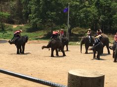 Performing adorable baby elephants