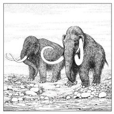 Reconstruction by Carolyn Hunt of Mammoths in Worcestershire