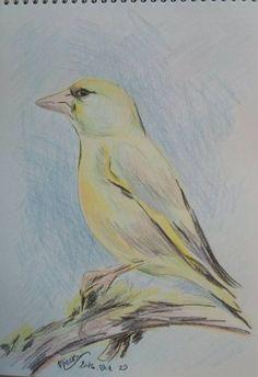 Zöldike-madár5- -színes ceruza rajz- -24x17 cm Bird, Animals, Animais, Animales, Animaux, Animal, Birds