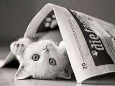 Newspaper cat