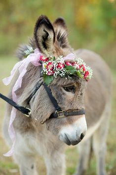 Fall inspired wedding, styled shoot, donkey, flower crown, Elovephotos, Just Dandy Events