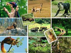 A Sojourn to Kerala's Wildlife through Kerala Wildlife Tour from Kerala-travel-tours.in @keralatravelt http://www.freepressrelease.com/sojourn-keralas-wildlife-kerala-wildlife-tour-keralatraveltoursin/854211/