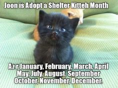 Adopt a Shelter Cat Month http://cheezburger.com/9043951360
