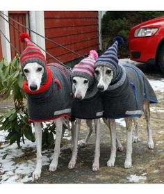 Do You Wanna Build a Snowman?: 15 Dogs That Are Ready for Winter - mom.me