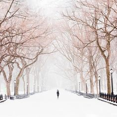 """Air France (@airfrance) na Instagrame: """"This famous park is covered in a beautiful white blanket in winter. Do you know where it is? Un…"""""""