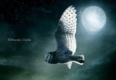Luna Flight