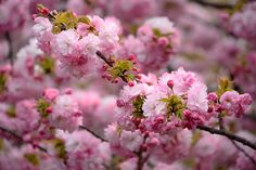Photo Pink On Pink by Vichaya Pop on 500px