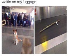 Dog luggage
