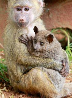 Animales Huérfanos Que Fueron Adoptados Por Una Especie Diferente. La Historia #8 Te Hará Llorar