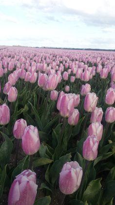 #noord-oost polder