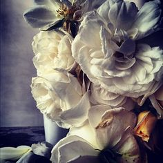nick knight flowers - Google Search