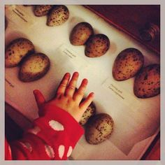 E is for EGGS (via Culture_Baby on Twitter) #MuseumABC