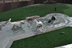 55 Inspiring DIY Backyard Projects for Your Pets – Pet Resort Dog Pond, Canis, Dog Playground, Pet Hotel, Pet Resort, Dog Rooms, Dog Daycare, Dog Boarding, Dog Houses