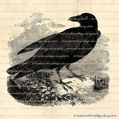 Black Crow, Raven Bird - Digital Image Download for Iron on Transfer, Papercrafts, Pillows, T-Shirts, Tote Bags, Burlap, No 00720