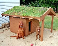 green-roof dog house- so eco! Large Dog House, Build A Dog House, Dog House Plans, Puppy House, Medium Dogs, Outdoor Dog, Animal House, Dog Houses, Garden Planning