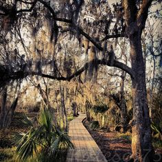 Jean Lafitte National Historical Park and Preserve - New Orleans, LA