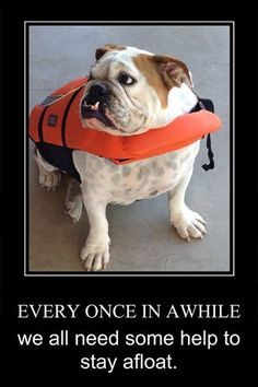 Because bulldogs can't swim!!! Good to know!