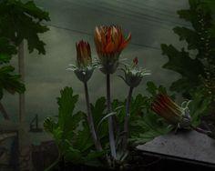 nevver: Flora and fa