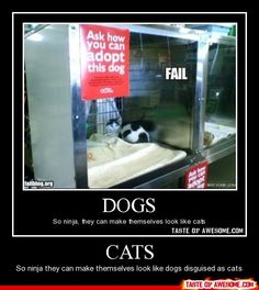 Lol fails photos of the hour AM, Wednesday March 2015 PDT) – 10 pics Make Em Laugh, Have A Laugh, Ninja Cats, Dog Fails, You Had One Job, Funny Gags, Old Cats, I Love Cats, I Laughed