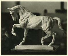 Anatomy Bones, Horse Anatomy, Anatomy Art, Animal Anatomy, Horse Sculpture, Animal Sculptures, Horse Drawings, Animal Drawings, Forte Apache