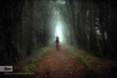 A a Walk In The Woods - Pinned by Mak Khalaf Fine Art IrelandNatureWoods by Mooro