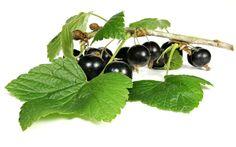 Si les baies du cassissier sont succulentes, ses feuilles sont réservées à un usage plus médicinal. En effet, le cassissier, alias Ribes nigrum, est certainement l'une des plantes médicinales les...