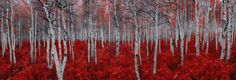 Rouge 2016 by Peter Lik -  Photograph Print