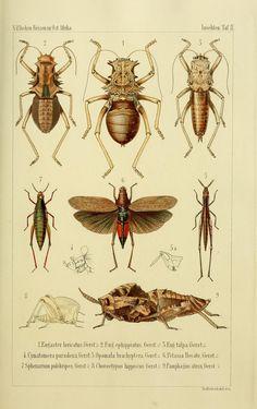 Die Gliedertheir-fauna des Sansibar-gebietes :. Leipzig :C. F. Winter,1873.. biodiversitylibrary.org/page/10680945
