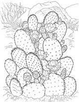 Dibujos De Cactus Para Colorear Y Pintar