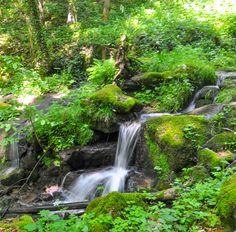 Naturschauspiel: Tatort Natur Fountain Ideas, Waterfalls, Nature, Outdoor, Beauty, Gardens, Places, World, Plants