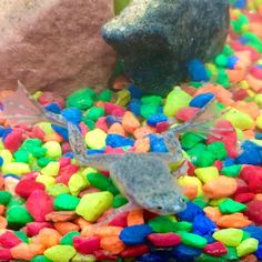 """Kimberly on Instagram: """"We LOVE our adorable new pets - African Dwarf Aquatic Frogs from @FroggysLair. These adorable frogs are VERY low maintenance, fun to watch…"""" Dwarf Frogs, I Go To Work, Little Critter, Cat Tree, Pet Beds, Holiday Gift Guide, Dog Cat, Cute Animals, African"""